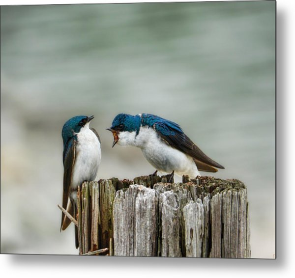Angry Swallow Metal Print