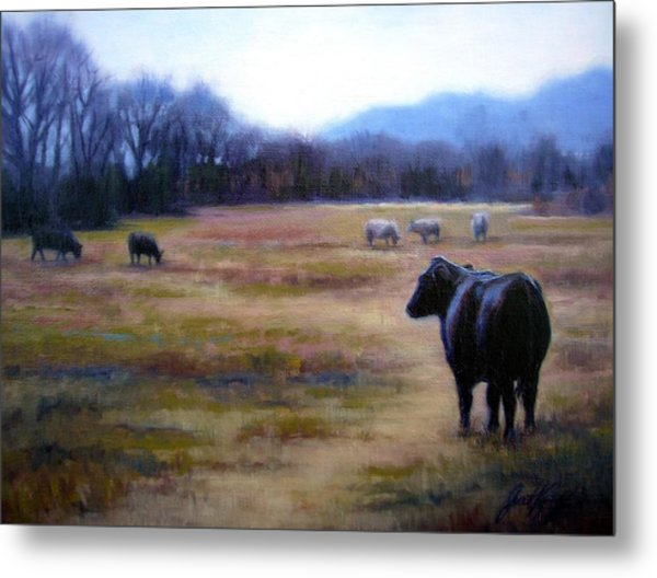Angus Steer In Franklin Tn Metal Print