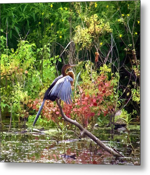 Anhinga In Swamp Metal Print
