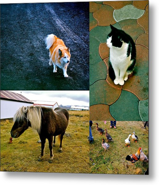 Metal Print featuring the photograph Animal Farm by HweeYen Ong