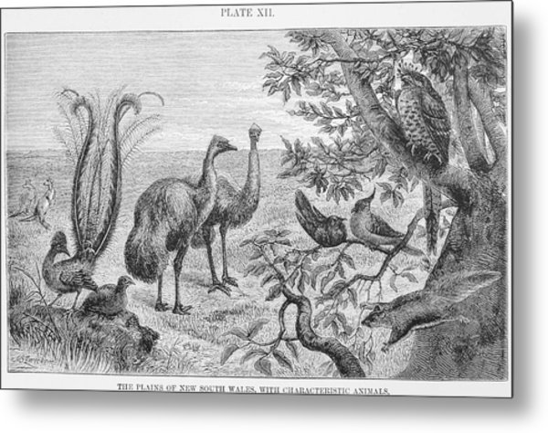 Animals Of The Plains Of New South Wales Metal Print