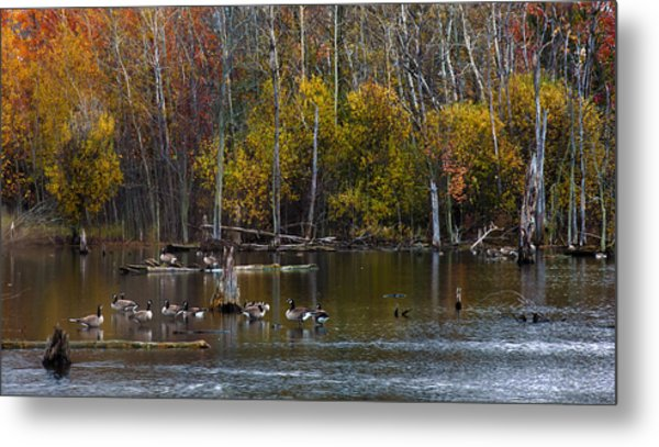 Annual Meet And Greet At The Pond Metal Print