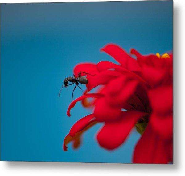 Ant On Flower Metal Print by Sarah Crites