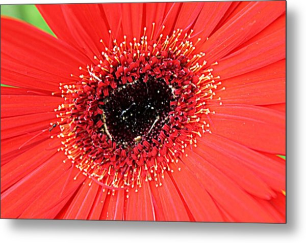 Ant That A Daisy Metal Print by Sarah E Kohara