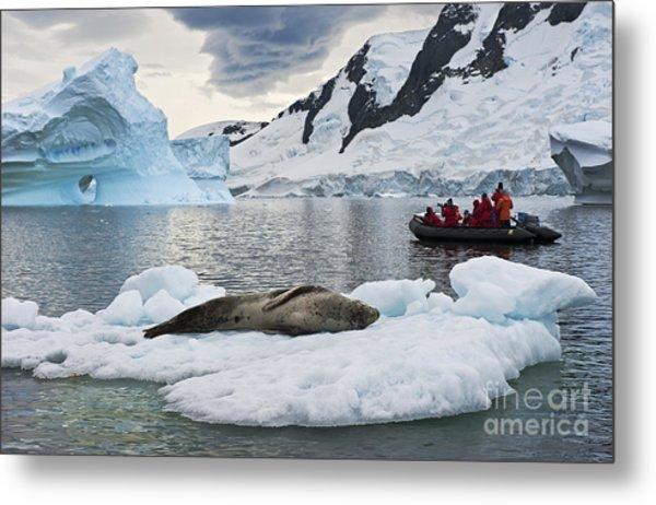 Antarctic Serenity... Metal Print