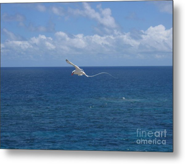 Antigua - In Flight Metal Print