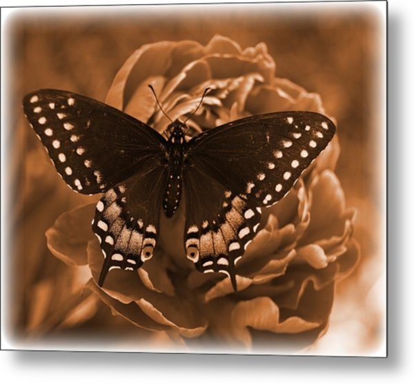 Antique Butterfly Metal Print by Diane Reed