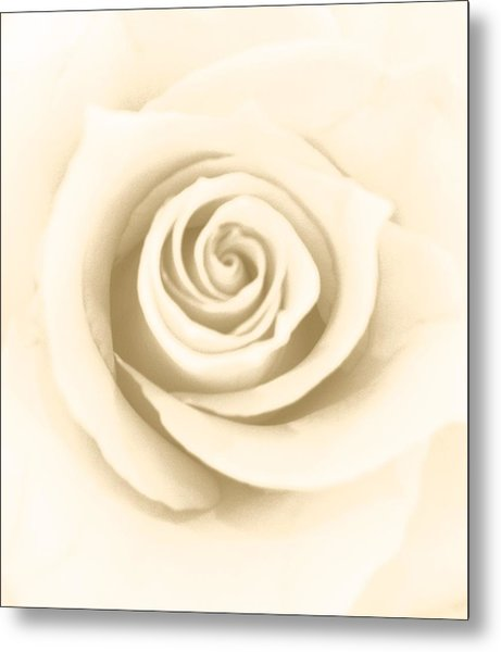 Antique Rose Metal Print