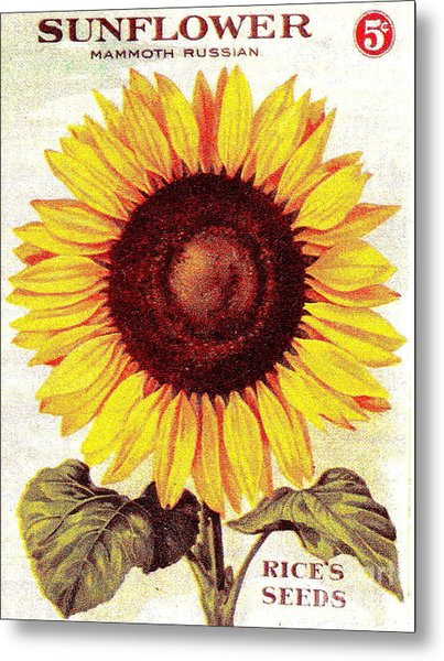 Antique Sunflower Seeds Pack Metal Print