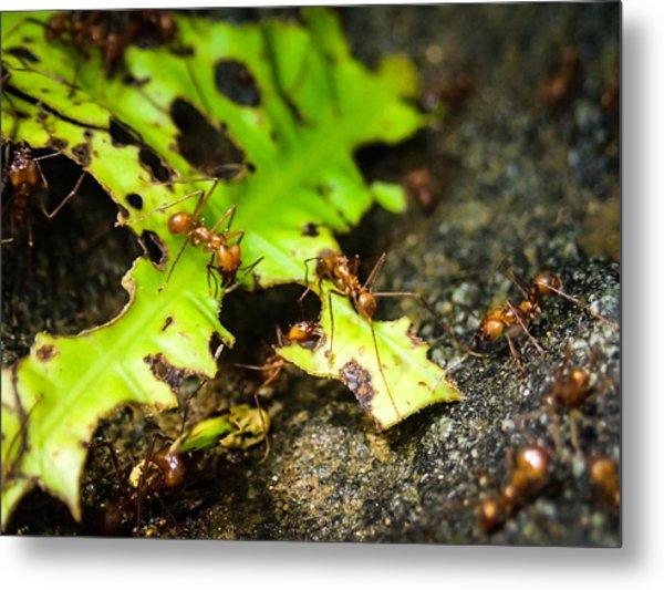 Ants At Work Metal Print