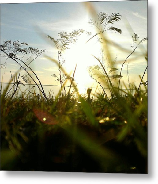 Ant's Eye View Metal Print