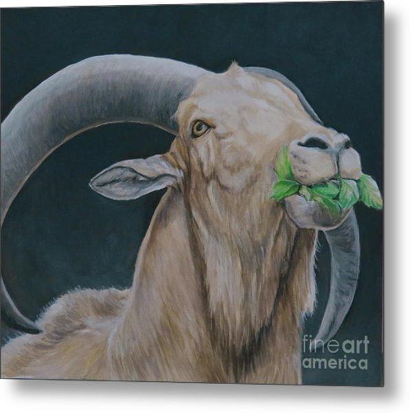 Aoudad Sheep Metal Print by Charlotte Yealey