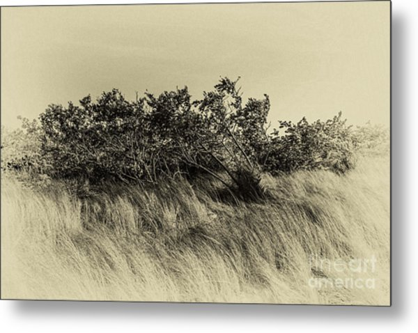Apollo Beach Grass Metal Print