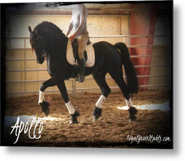 Apollo Friesian Stallion Metal Print
