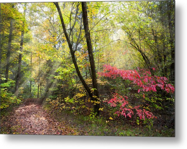 Appalachian Mountain Trail Metal Print