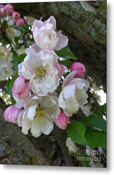 Apple Blossom Bouquet Metal Print
