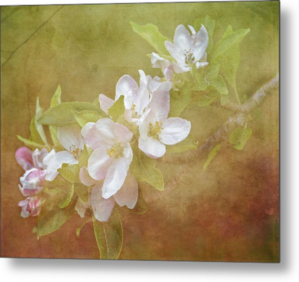 Apple Blossom Spring Metal Print