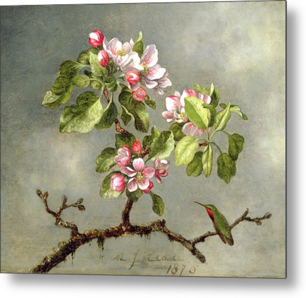 Apple Blossoms And A Hummingbird Metal Print