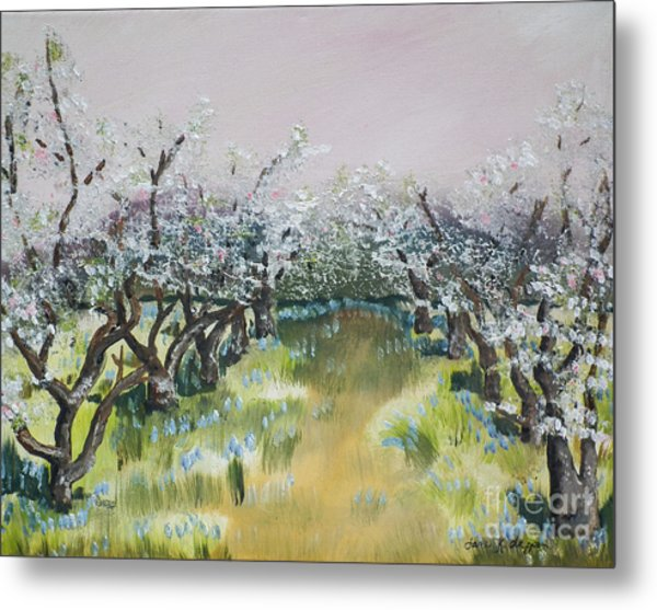 Apple Blossoms In Ellijay -apple Trees - Blooming Metal Print