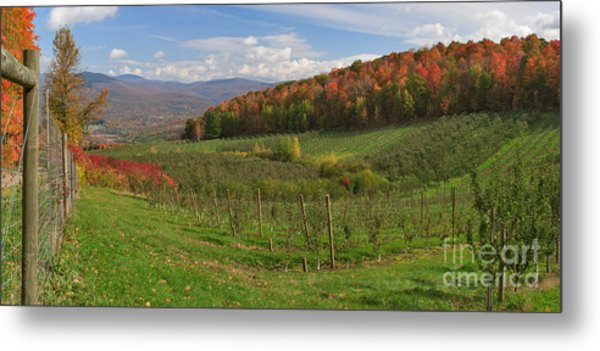 Apple Orchard Panorama Metal Print