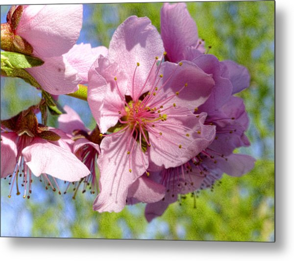 April Peach Blossoms Metal Print