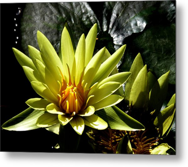 Aquatic Beauty Metal Print