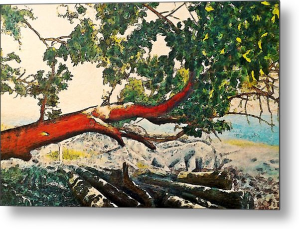 Arbutus Over Beach Metal Print