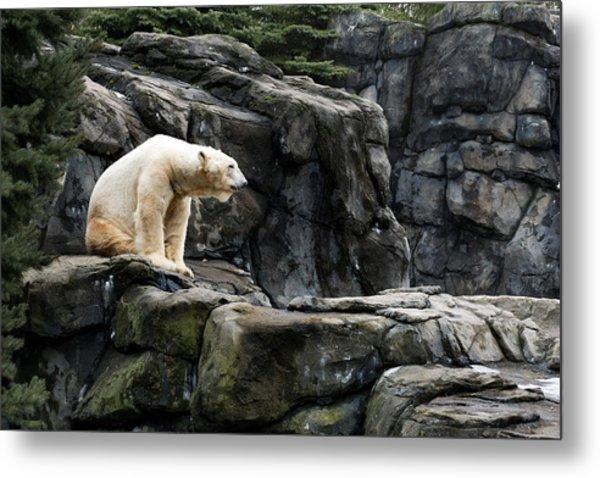 Arctic Bear Metal Print
