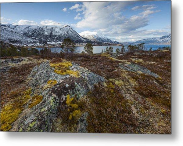 Arctic Lichen Metal Print