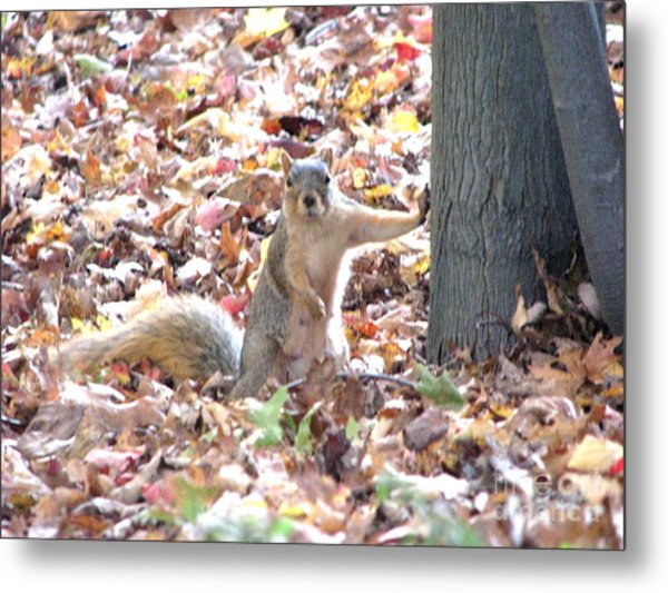 Are You Looking At Me ? Metal Print