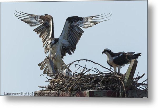 Are You Watching ... This How You Land    Metal Print by Glenn Lawrence