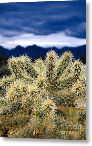 Arizona Teddy Bear Cactus Metal Print
