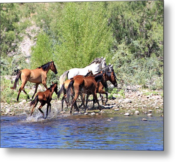 Arizona Wild Horse Family Metal Print