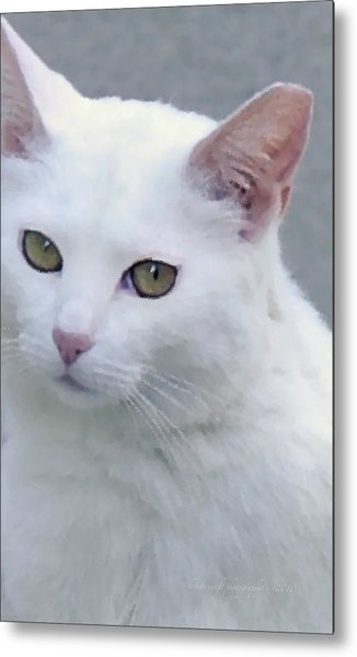 Metal Print featuring the photograph Art Cat by Kristi Swift