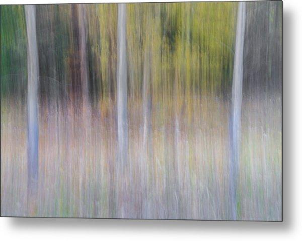 Artistic Birch Trees Metal Print