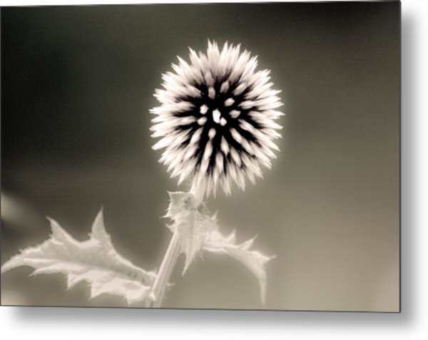 Artistic Black And White Flower Metal Print