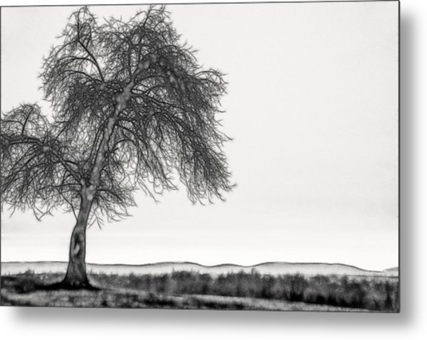 Artistic Black And White Sunset Tree Metal Print