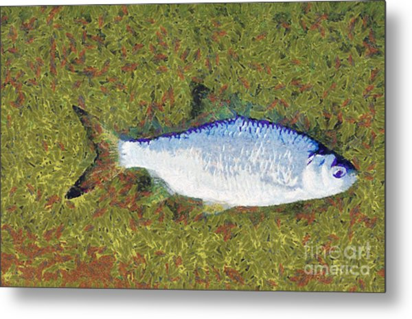 Artistically Painted Fish Metal Print by Odon Czintos