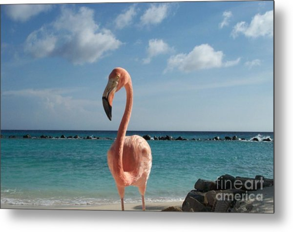 Aruba Hairy Eyeball Metal Print