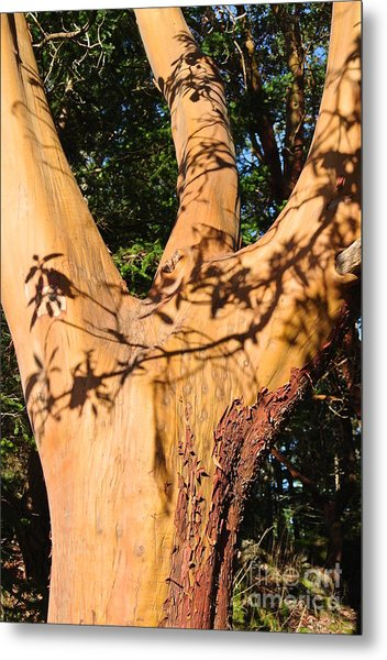 Arbutus - Shadows From Above Metal Print