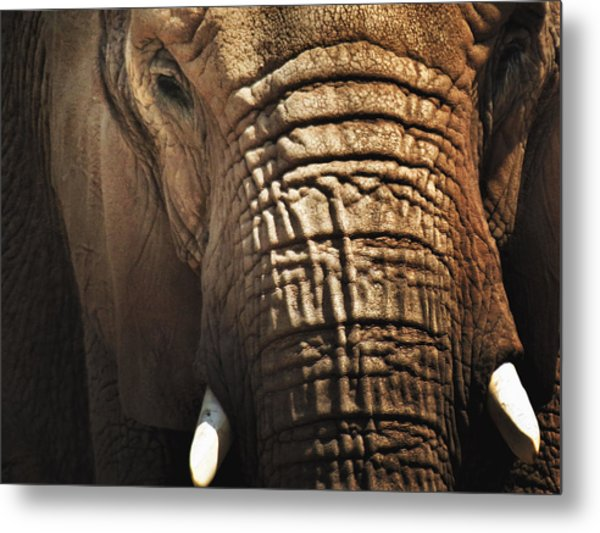 As High As An Elephant's Eye Metal Print by Susan Desmore