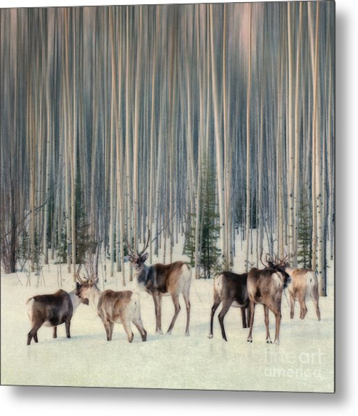 Caribou And Trees Metal Print