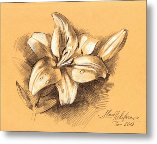 Asiatic Lily Flower With Bud Sketch Metal Print