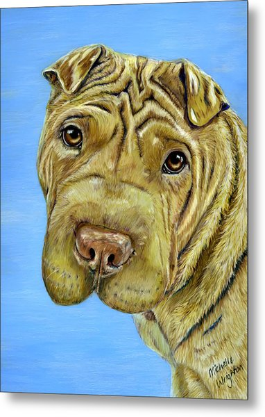 Beautiful Shar-pei Dog Portrait Metal Print