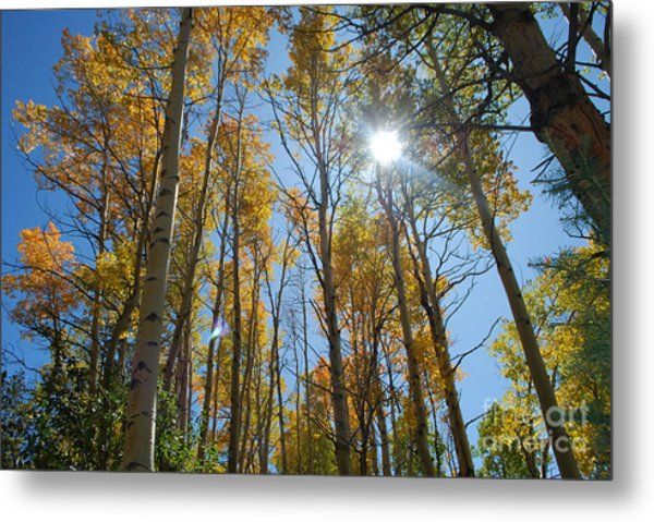 Aspen Afternoon Metal Print by William Wyckoff