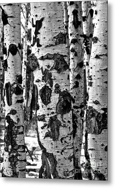 Metal Print featuring the photograph Aspen Art by Mae Wertz