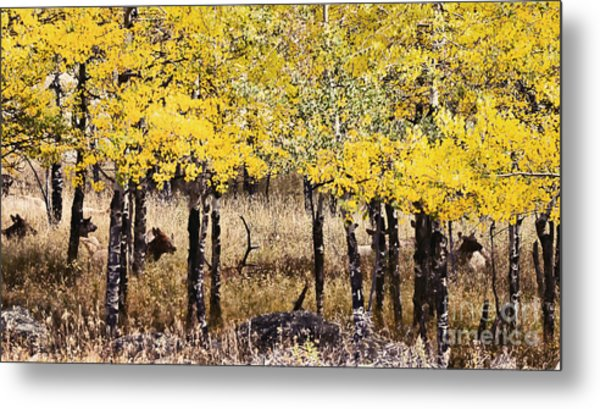 Aspen Grove Afternoon Metal Print