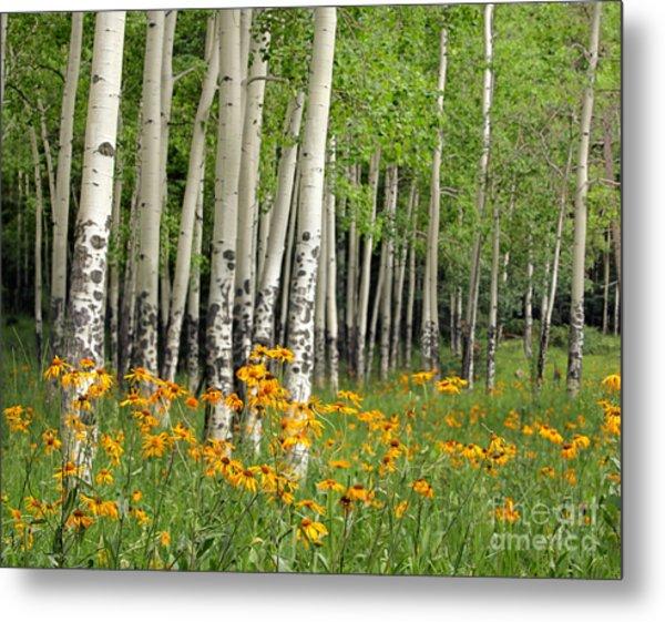 Aspen Grove And Wildflower Meadow Metal Print