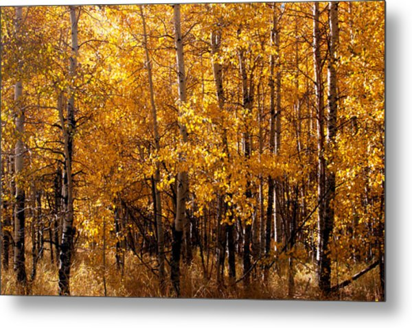 Aspen Grove Tahoe City Metal Print