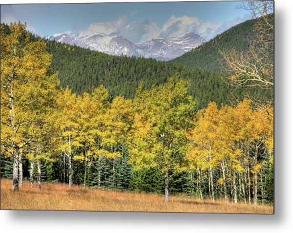 Aspen In Fall Mt Evans Metal Print